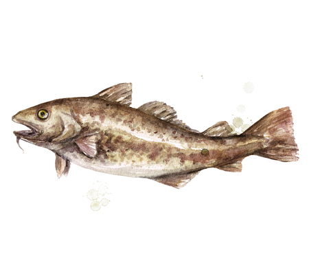 Cod fish. Watercolor Illustration. 스톡 콘텐츠