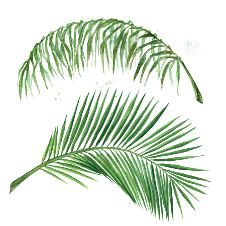 Palm leafs. Watercolor Illustration.
