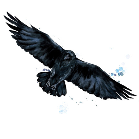 Raven. Watercolor Illustration.