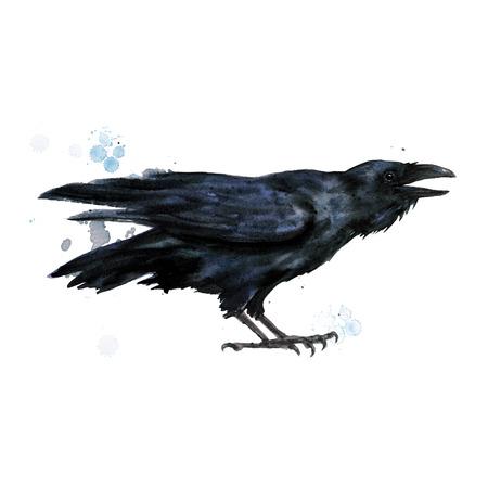 Cuervo. Ilustración de acuarela.