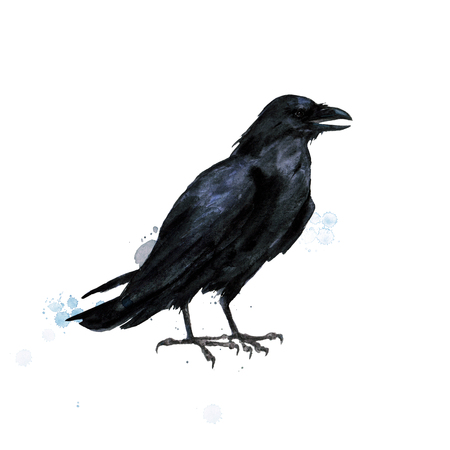 Raven. Watercolor Illustration. 写真素材 - 102529124