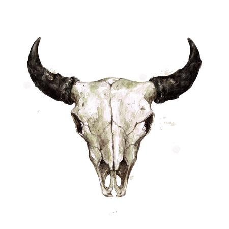 Crâne de bison. Illustration aquarelle.