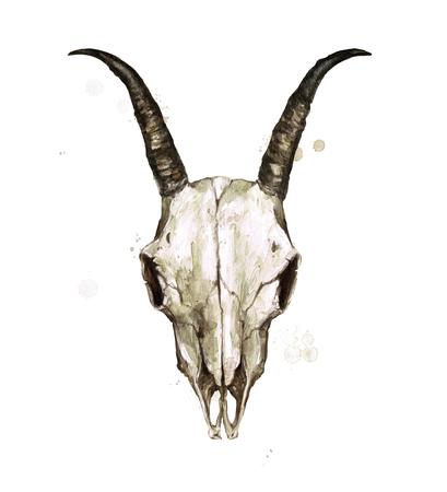 Goat Skull. Watercolor Illustration.