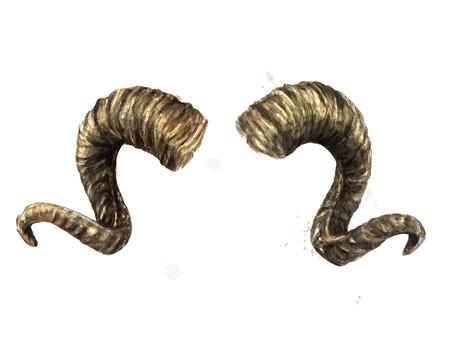 Ram horns. Watercolor Illustration.