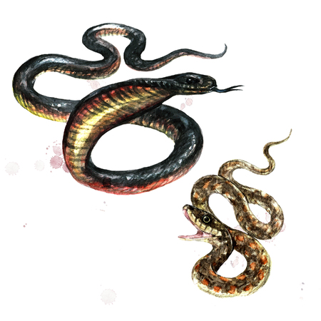 Snakes. Watercolor Illustration.