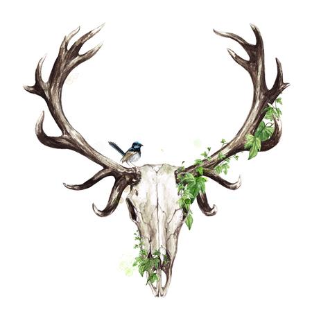Animal Skull. Watercolor Illustration. Zdjęcie Seryjne - 106617315