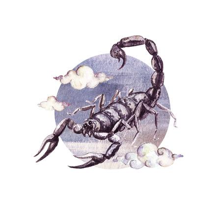 Zodiac sign - Scorpio. Watercolor Illustration