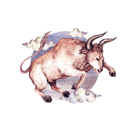 Zodiac sign - Taurus. Watercolor Illustration Stock Photo
