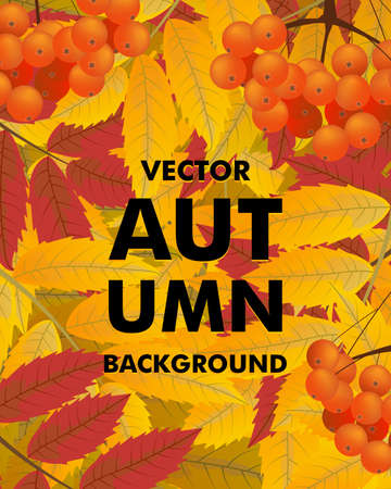 Autumn vertical background with rowan, berries and leaves, fall. Vector illustration.