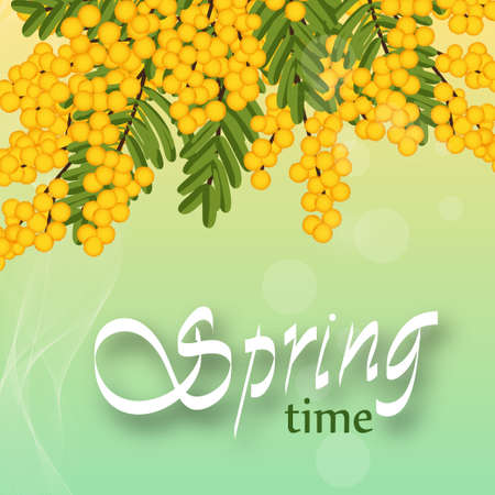 Mimosa on light background. Yellow flowers. Template for spring holidays, banner social network. Vector illustration.  イラスト・ベクター素材