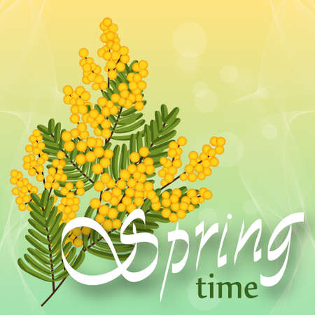 Mimosa on light background. Spring yellow flowers. Template for spring holidays, banner social network. Spring time. Vector illustration.