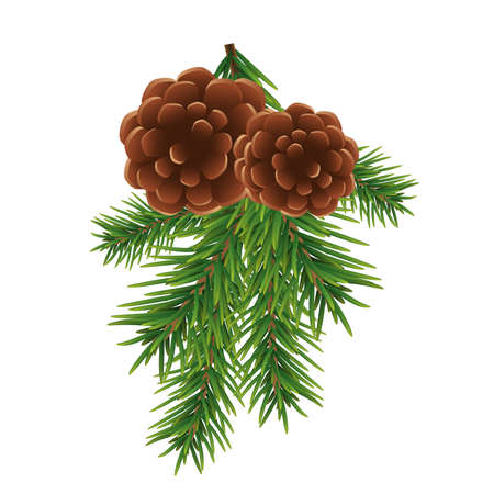 Fir branch and brown cones isolated on white background. Christmas and New year decoration. Vector illustration.
