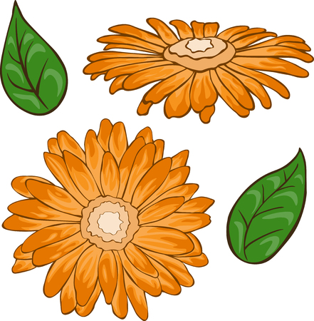 Orange chamomile set. Colored and lined chamomile flower with leaves. Иллюстрация