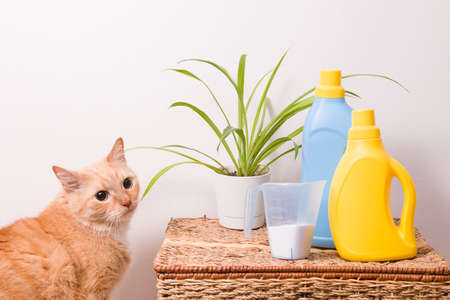 cute red cat sitting next to a wicker basket, washing powder in a measuring cup, washing gel and fabric softener in brightly colored bottles without labels on the basket
