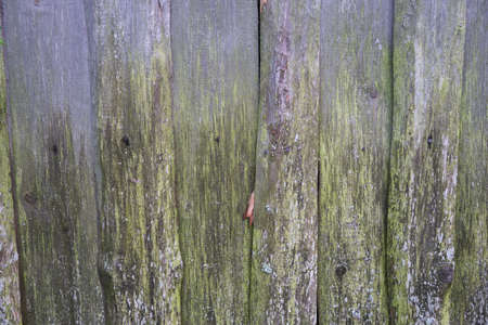 Grunge plank wood texture background close up wall of old boards with moss
