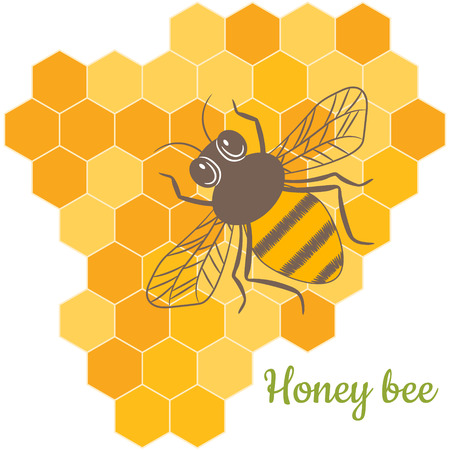beeswax: Vector Honey Bee with honeycomb, honey, beeswax. Natural beekeeping products.
