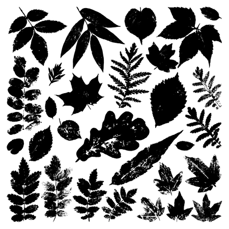 inprint: Collection black leaves isolated on white background. Vector grunge design elements. Illustration
