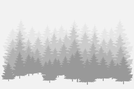 Misty pine forest. Vector background.