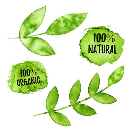 100% natural, organic, natural product ecology nature design. 일러스트