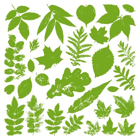 inprint: Collection green leaves isolated on white background. Vector grunge design elements.