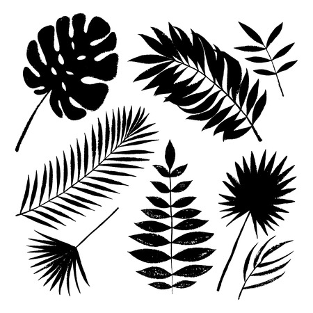 Summer black silhouette tropical palm tree leaves elements. Vector grunge design for cards, web, backgrounds and natural product.