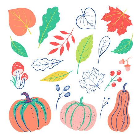 Autumnal doodles elements set with pumpkin, leaves, berries, acorn, mushroom. Vector harvest falling background