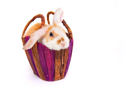 Cute little orange and white color bunny rabbit in wicker basket isolated on white background - animals and pets concept. Reklamní fotografie