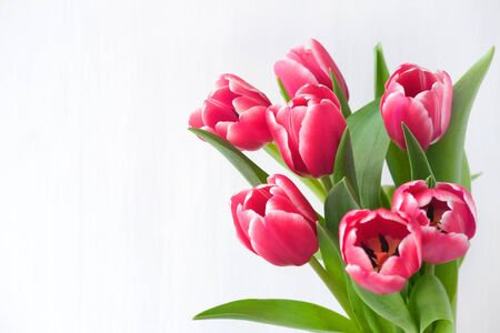 Spring banner. Purple pink tulip bouquet on the white background. Easter and spring greeting card. Woman day concept. Copyspace for text. Reklamní fotografie - 140194221