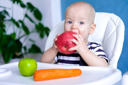 baby food. Little cutest caucasian child eating big red apple. looking at camera on highchair. Fresh vegetables and fruits. New born infant kids.