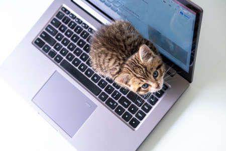Small striped kitten sitting on laptop keyboard and looking up at camera. Top view