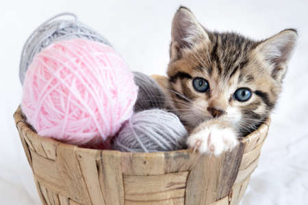 Striped kitten sitting in basket with pink and grey balls skeins of thread on white bed. Cute little cat.