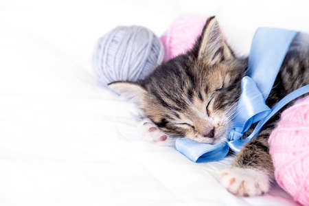 Cute Cat sleeping with pink and grey balls skeins of thread on white bed. Copyspace for text. Фото со стока