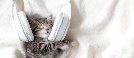 Cute sleeping striped Cat Kitten listening music in Headphones on white bed. Musical pets banner. Copyspace Фото со стока