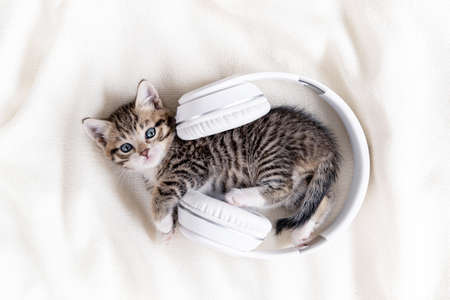 Little striped Cat Kitten with Headphones on white bed. Musical pets concept. Фото со стока