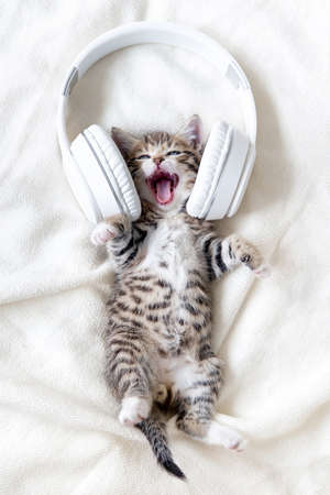 Little funny striped Cat Kitten singing song in Headphones on white bed. Kitty with open mouth Musical pets concept.