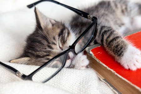 Striped kitten sleeping with book and eyeglasses lying on white bed. Clever cute little domestic cat. Education and back to school.