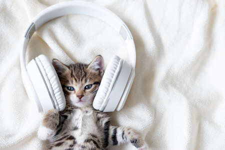 Cute striped Cat Kitten listening music in Headphones on white bed. Musical pets concept. Фото со стока