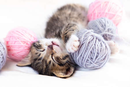 Cute Cat sleeping with pink and grey balls skeins of thread on white bed.