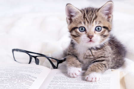 Striped kitten with book and eyeglasses lying on white bed. Clever cute little domestic cat. Education and back to school.