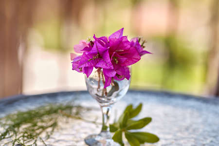 Summer surreal flowers creative trendy concept. Pink flowers Bougainvillea in a glass of wine on the glass table. Summer vacation concept. Copy space