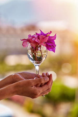 Woman holds bright pink flowers Bougainvillea in a glass in front of mountains in sunny weather. Advertising concept of travel and bright summer vacation. Summer surreal flowers creative trendy concept