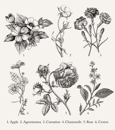 Botany. Set vintage medical realistic isolated flowers herbs. Nature baroque. Drawing engraving sketch retro. Vector background victorian Illustration. Apple Agrostemma Carnation Chamomile Rose Croton Ilustración de vector