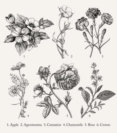 Botany. Set vintage medical realistic isolated flowers herbs. Nature baroque. Drawing engraving sketch retro. Vector background victorian Illustration. Apple Agrostemma Carnation Chamomile Rose Croton Vektorové ilustrace