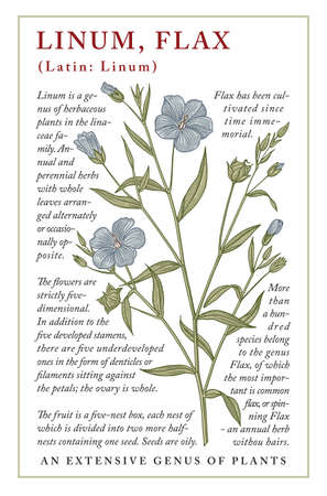 Linum, Flax. Beautiful blooming realistic isolated blue flowers. Vintage greeting invitation card. Frame, label. Drawing engraving Freehand. Floral medical nature. Vector stock victorian illustration.