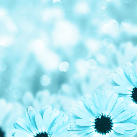 flowers bokeh: Floral border blurred background flowers chamomile Stock Photo