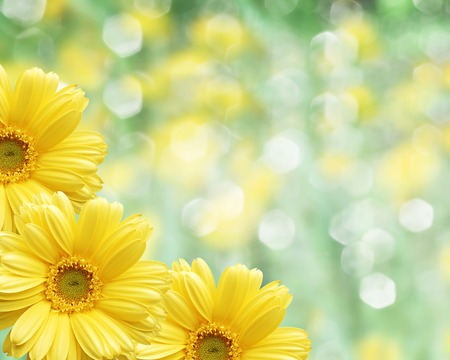 Floral border fond flou fleurs jaunes camomille