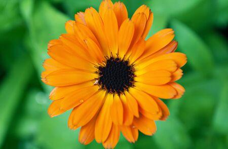 Scenic belles fleurs de fond flou des frontières floral Banque d'images