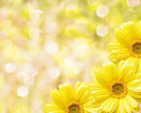 Floral border fond flou fleurs de camomille