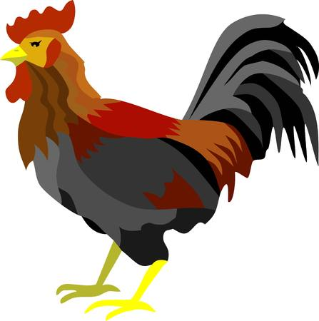 Cock or Rooster Vector Illustration