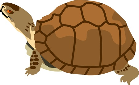 Turtle Animal Vector Illustration